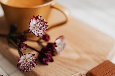 kaboompics_Coffee & Great Masterwort