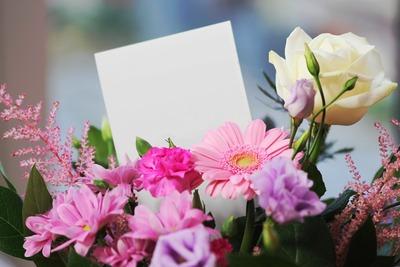 beautiful-blank-bloom-blooming-267360