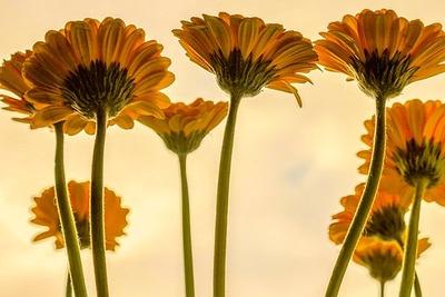 flowers-3705716__340
