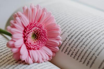 kaboompics_Gerbera & Book